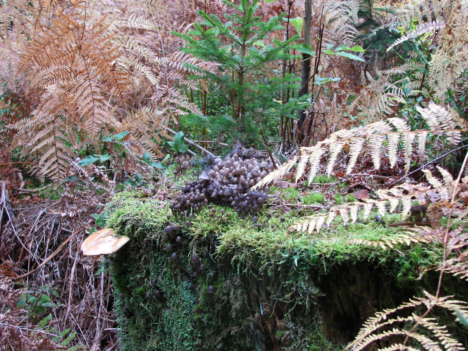 Voyage au cœur de la vie des mousses, forêt de la comté
